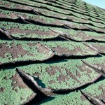 curling roofing shingle - mold and moss on roof shingles